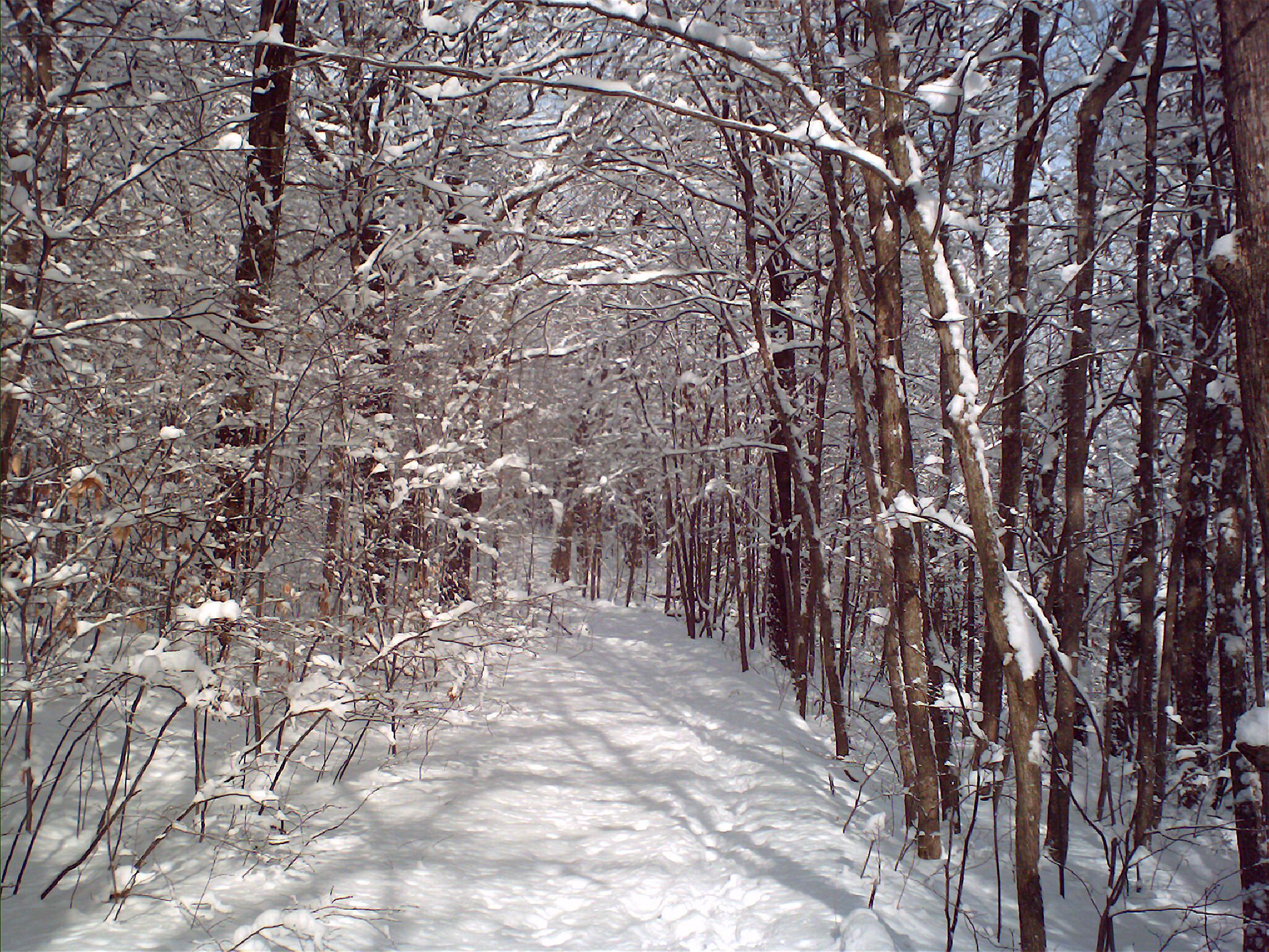 woods wanderer snowy woods