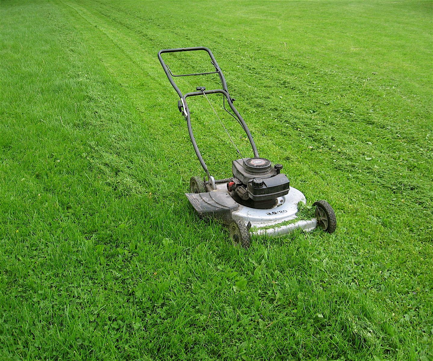 Woods wanderer cutting grass for Lawn mower cutting grass