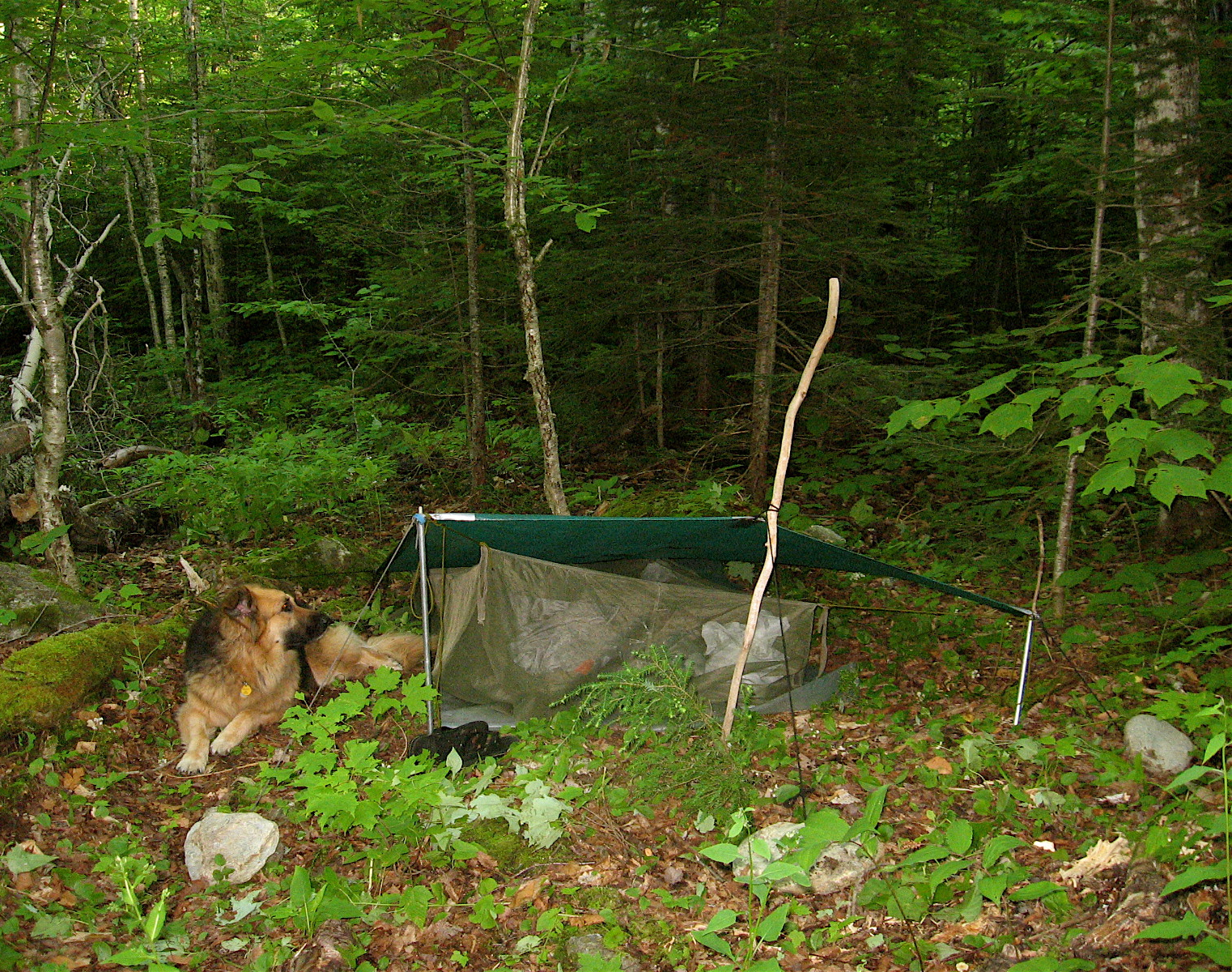 Every ... & Woods Wanderer » camping