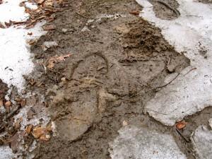 cold mud