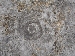 gastropod1