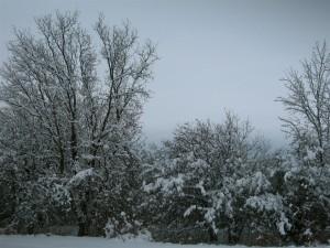 snowladentrees