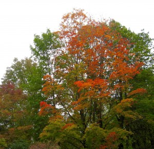 RT fall foliage