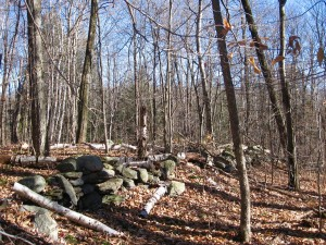 November woods