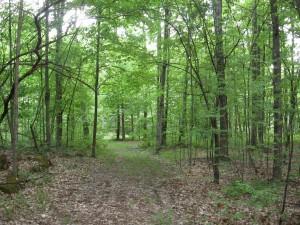 10 Acre Wood