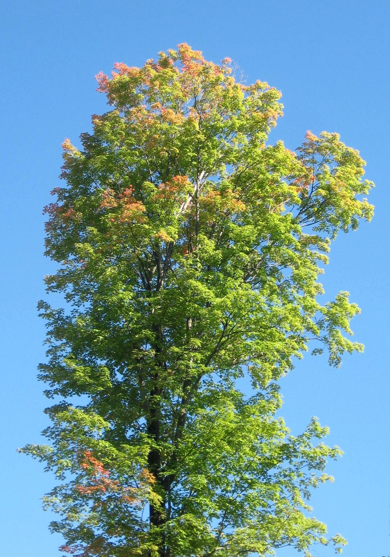 Woods Wanderer » fall foliage