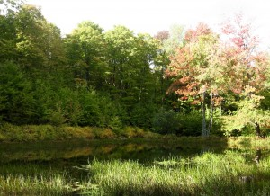 town-forest-pond-early-oct