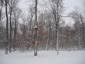 backyard-first-snow