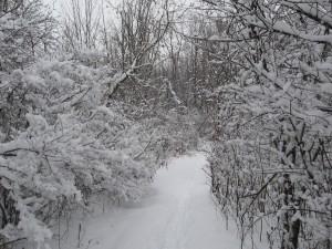 snowy-walk-1