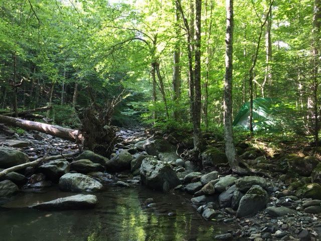 woods wanderer back on the brook